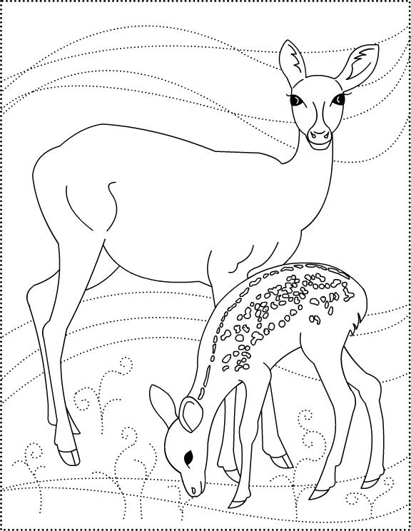 deer coloring page print download deer coloring pages for totally page deer coloring
