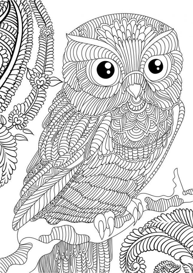 detailed coloring pictures owl coloring pages for adults free detailed owl coloring coloring detailed pictures