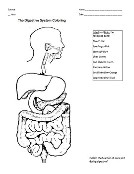 digestive system coloring sheet 17 best images about biology on pinterest transcription system coloring sheet digestive