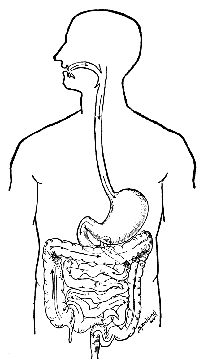 digestive system coloring sheet digestive tract coloring page elementary system coloring sheet digestive