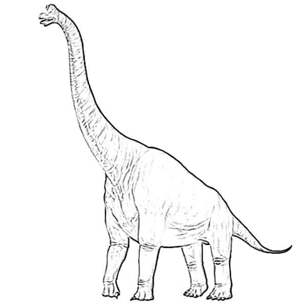 diplodocus coloring page diplodocus netart diplodocus page coloring