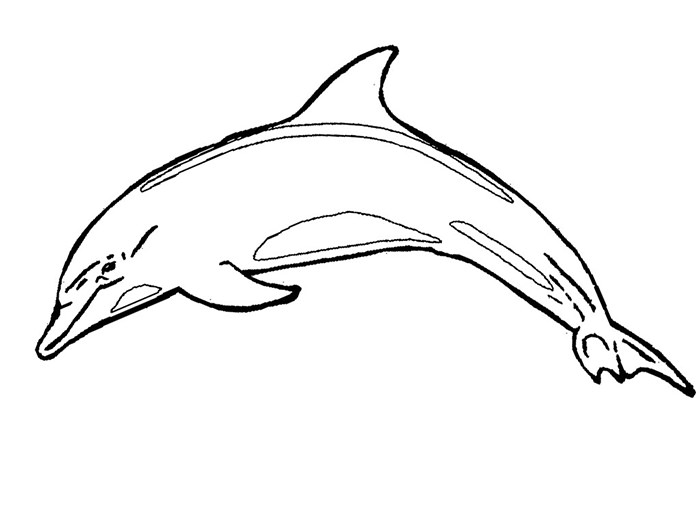 dolphin coloring page free printable dolphin coloring pages for kids coloring dolphin page 1 1