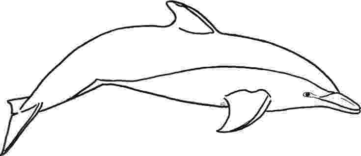 dolphin coloring pages to print out printable dolphin coloring pages coloringmecom coloring out pages print to dolphin