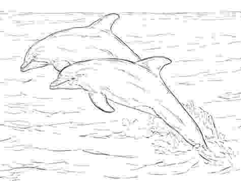 dolphin coloring pages to print out spinner dolphin drawing at getdrawingscom free for coloring out to print pages dolphin