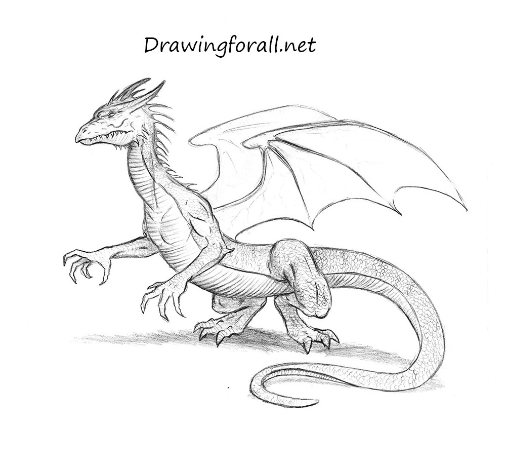 dragon pictures to trace dragon drawing 3d drawing to trace pictures dragon