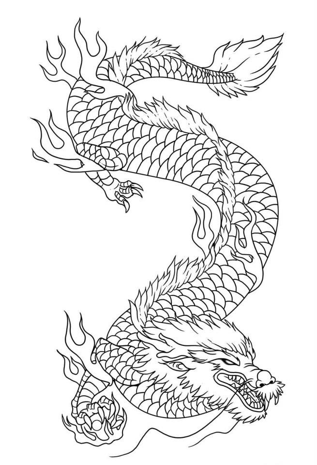 dragon pictures to trace dragon tracing by dravedragonheart on deviantart dragon to pictures trace