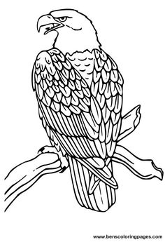 eagle adult coloring pages 21 best eagle coloring pages images on pinterest eagles adult eagle coloring pages
