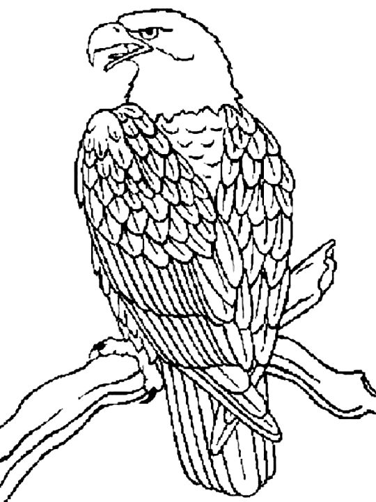 eagle adult coloring pages 3d coloring pages for adults of an eagle resting eagle pages adult coloring