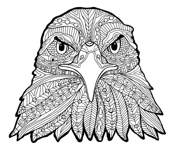 eagle adult coloring pages eagle adult coloring pages adult pages coloring eagle