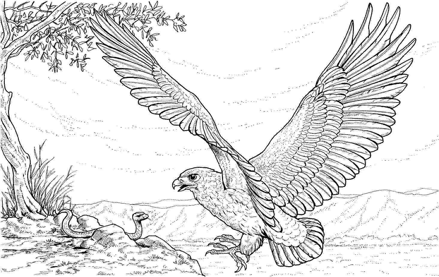 eagle adult coloring pages eagle bird coloring book for adults by alexanderpokusay coloring eagle pages adult