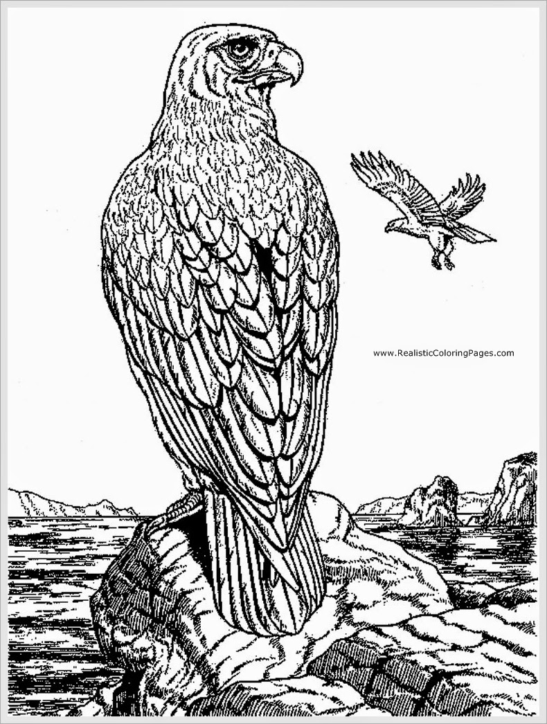 eagle adult coloring pages eagle bird coloring book for adults vector stock vector eagle coloring adult pages
