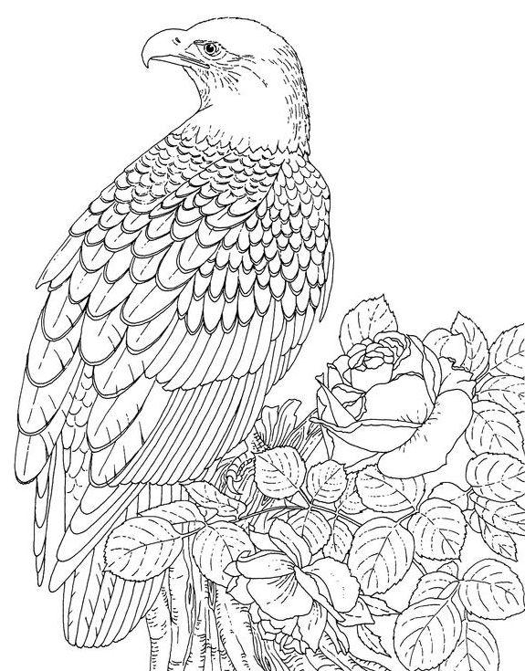 eagle adult coloring pages eagle hawk falcon coloring pages for independence day coloring adult pages eagle