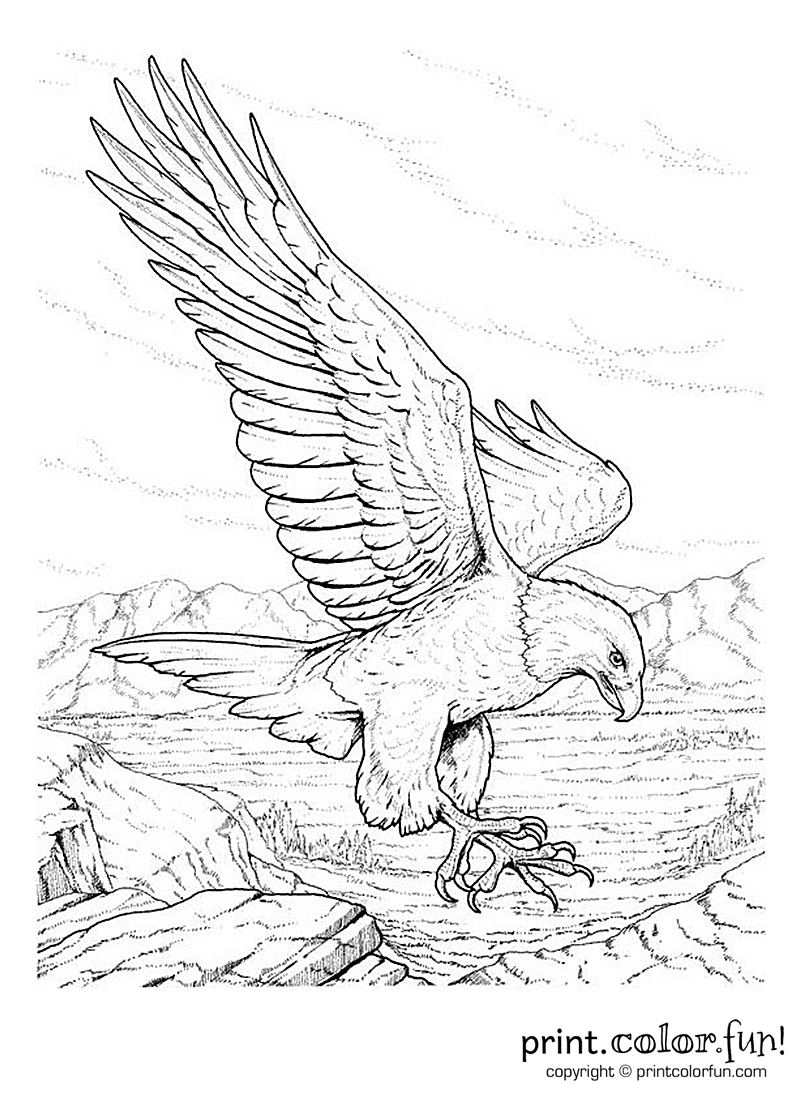 eagle adult coloring pages ethnic animal doodle detail pattern eagle zentangle eagle coloring adult pages