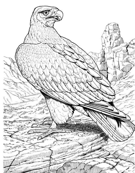 eagle adult coloring pages zentangle stylized eagle stock vector image 74060636 adult eagle coloring pages