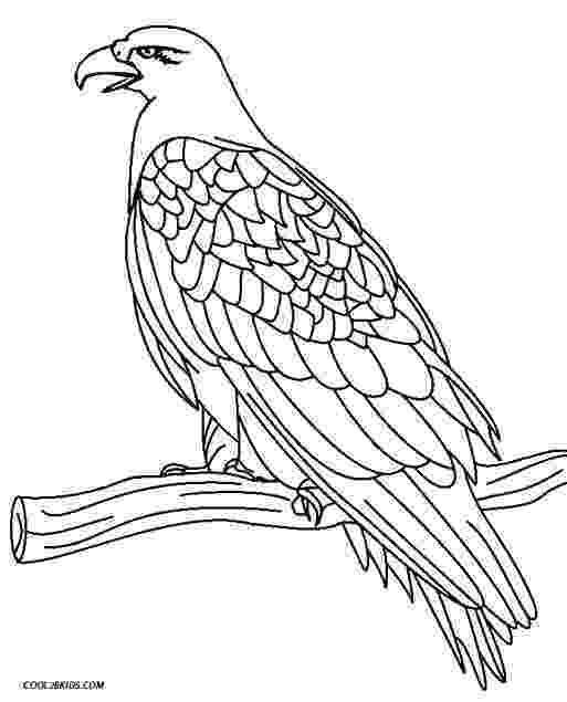 eagle color sheet the eagle stories for muslim kids color eagle sheet