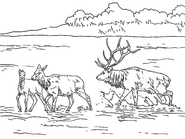 elk coloring page bull elk coloring pages download and print for free coloring page elk