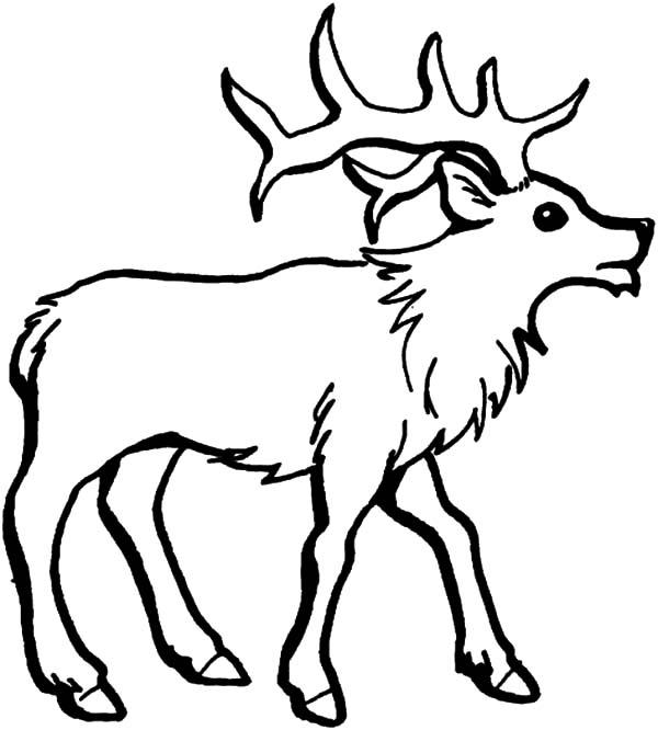 elk coloring page bull elk coloring pages download print online coloring coloring page elk