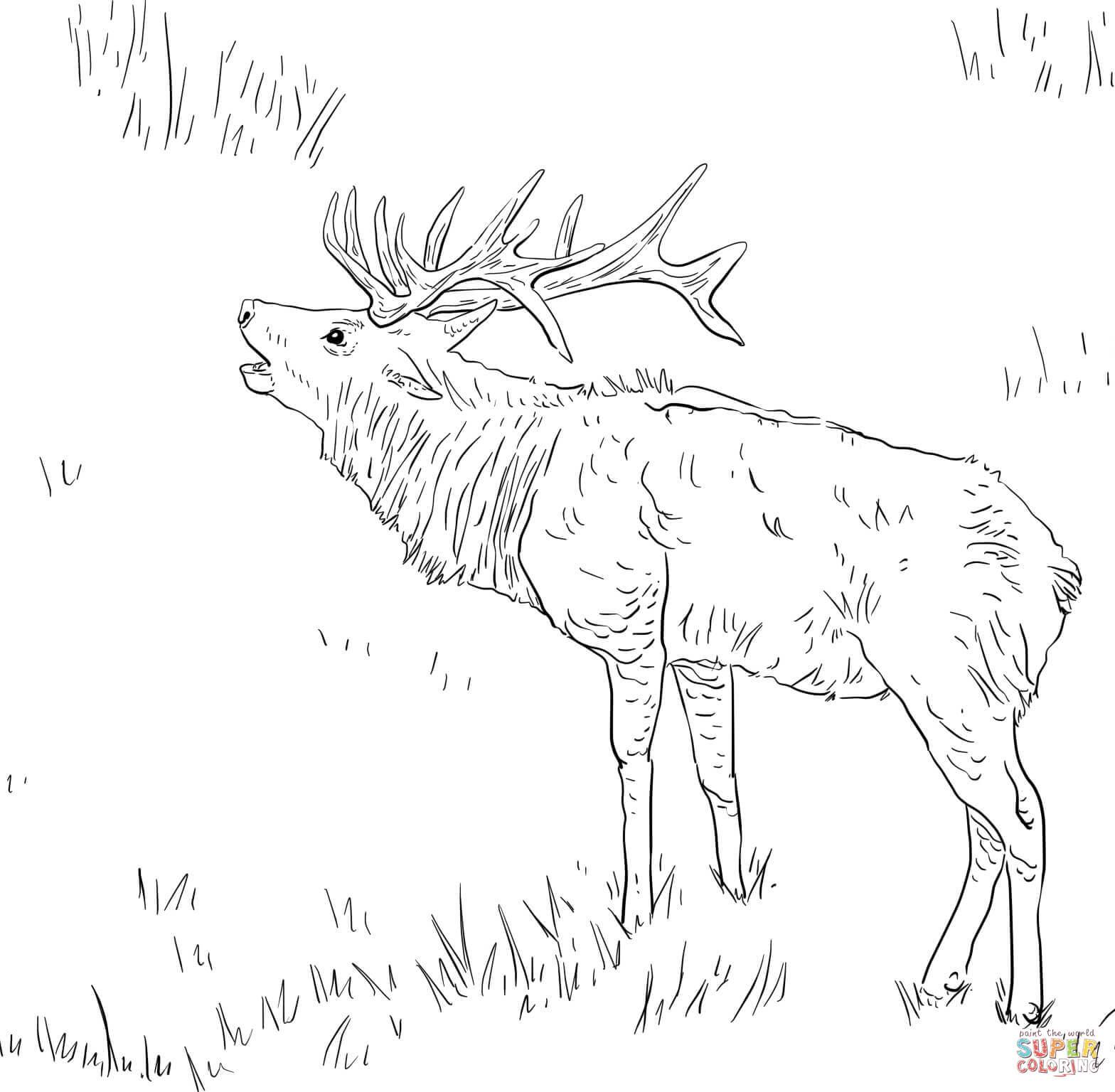 elk pictures to color 287 best deer images on pinterest deer hunting and color pictures to elk