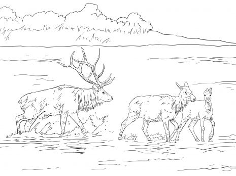 elk pictures to color deep moose coloring page elk to pictures color