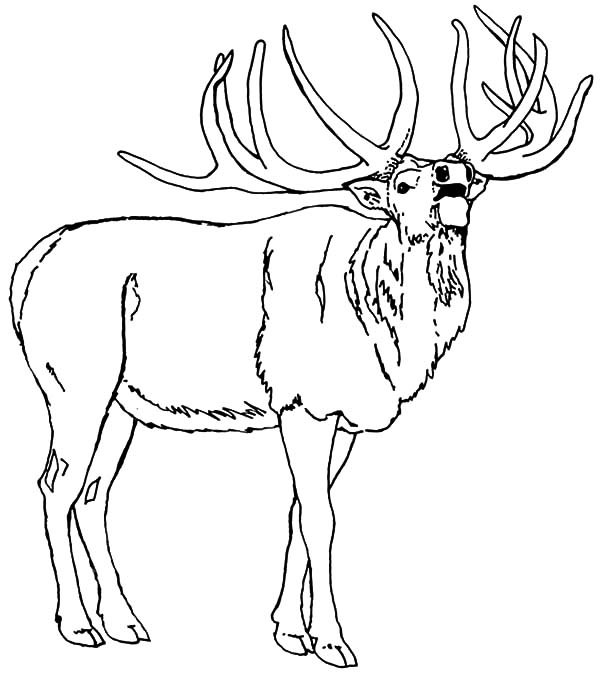 elk pictures to color download online coloring pages for free part 14 color elk to pictures