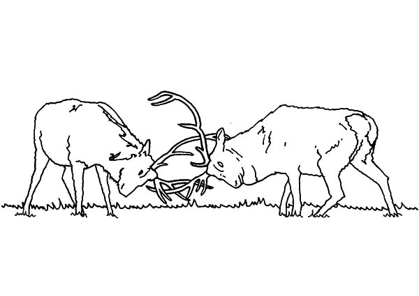 elk pictures to color download online coloring pages for free part 14 elk to pictures color