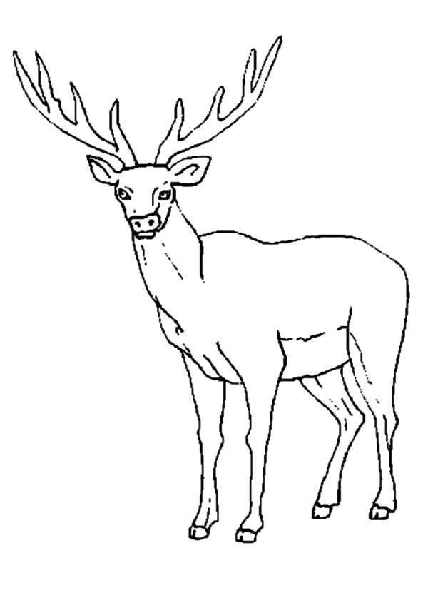 elk pictures to color download online coloring pages for free part 14 pictures color elk to
