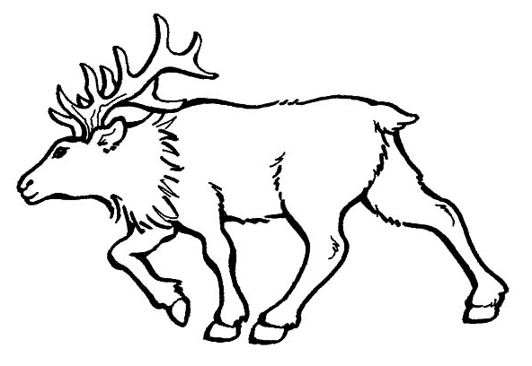 elk pictures to color elk coloring pages elk to pictures color