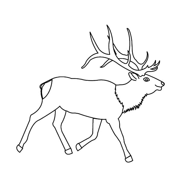 elk pictures to color moose antler coloring pages elk color pictures to
