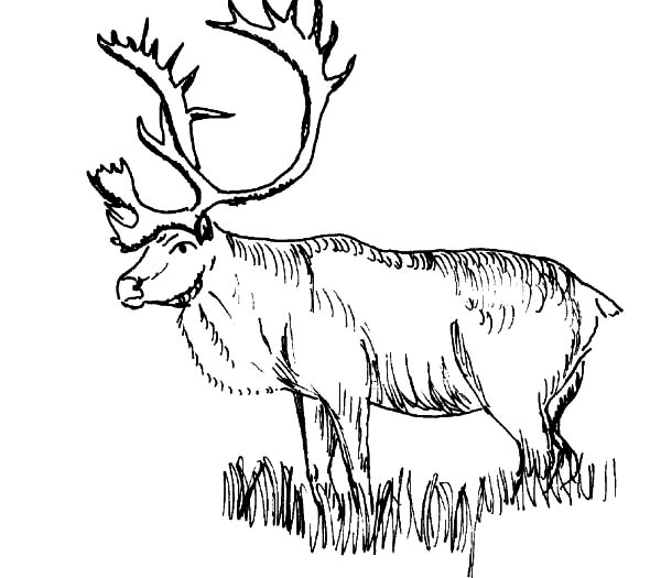elk pictures to color simple elk coloring pages color pictures elk to