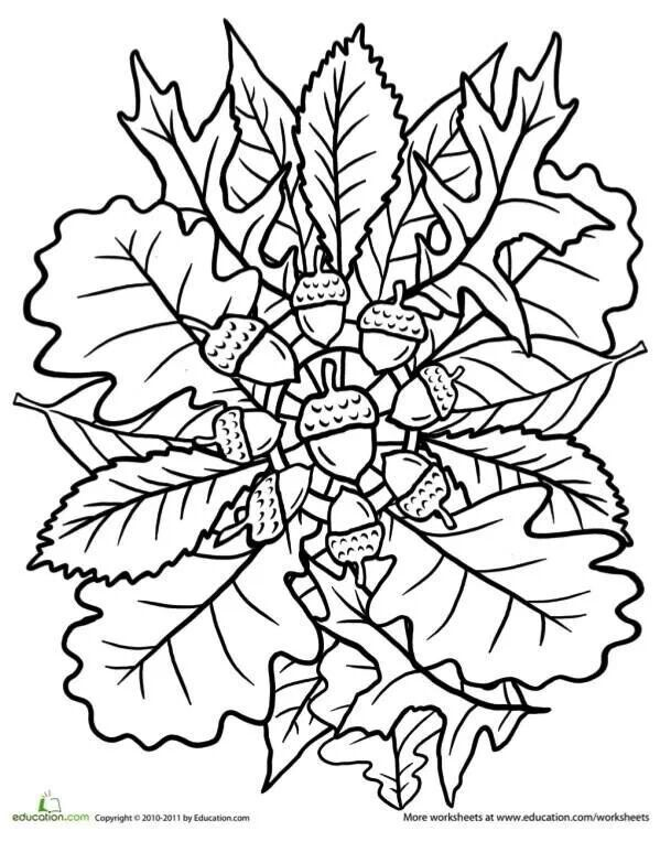 fall leaves coloring fall coloring pages printable printable autumn leaves leaves fall coloring