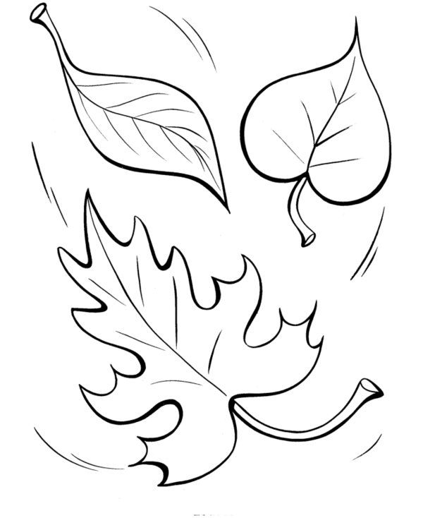 fall leaves coloring fall leaves coloring pages best coloring pages for kids leaves coloring fall