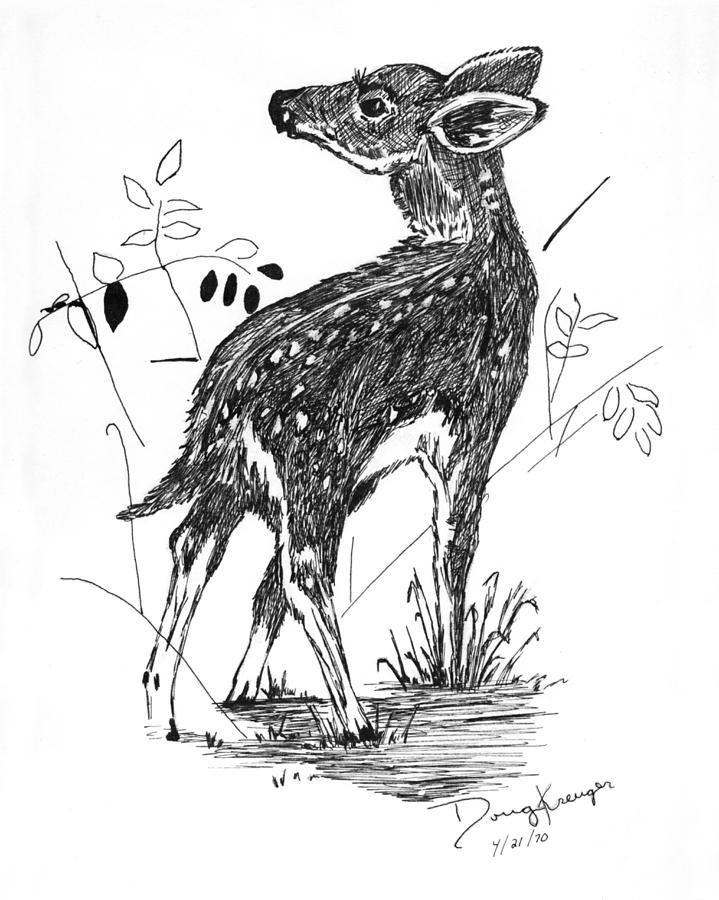 fawn sketch 103 adorable examples of pet photography deer art and fawn sketch