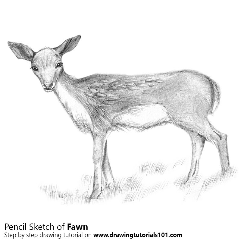 fawn sketch 277 best fawn sketches images on pinterest deer art art fawn sketch