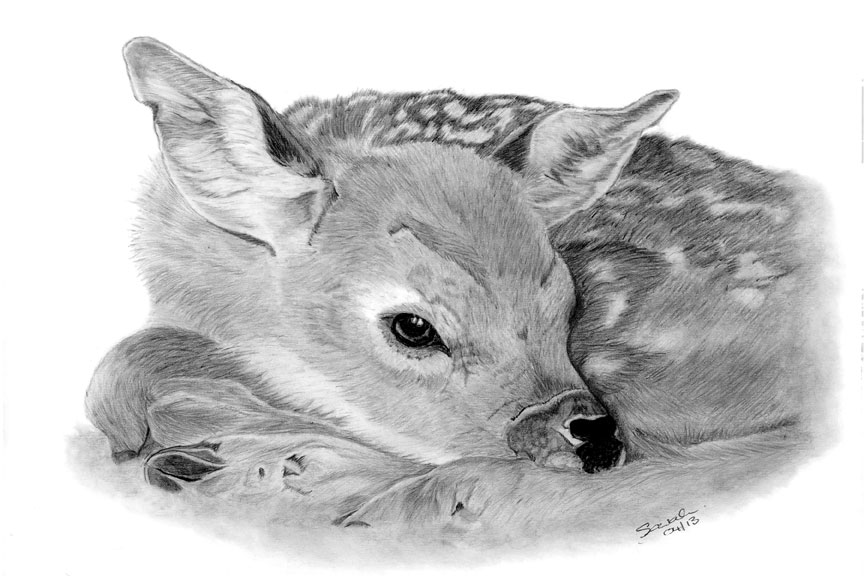 fawn sketch 277 best fawn sketches images on pinterest deer art art sketch fawn