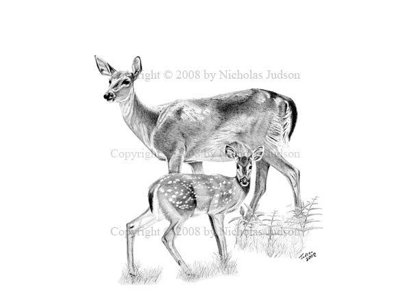 fawn sketch 277 best fawn sketches images on pinterest deer art art sketch fawn 1 1