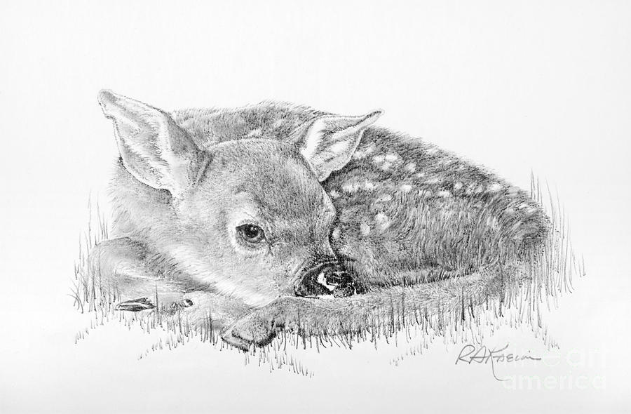 fawn sketch baby deer aka fawn pencil drawing how to sketch baby sketch fawn