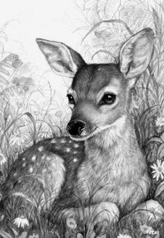 fawn sketch fawn drawing by callan rogers grazado fawn sketch