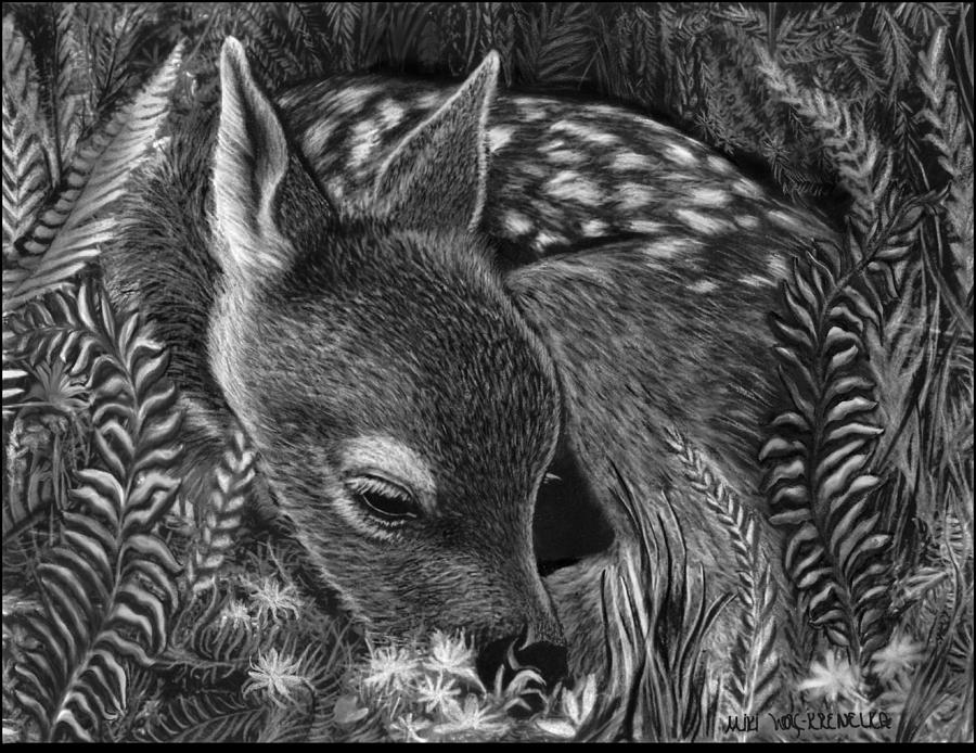 fawn sketch fawn drawing by lawrence tripoli sketch fawn