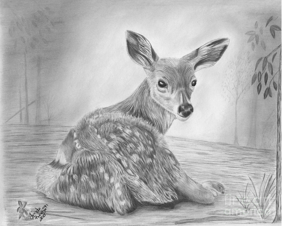 fawn sketch fawn in the grass by roy kaelin fawn sketch