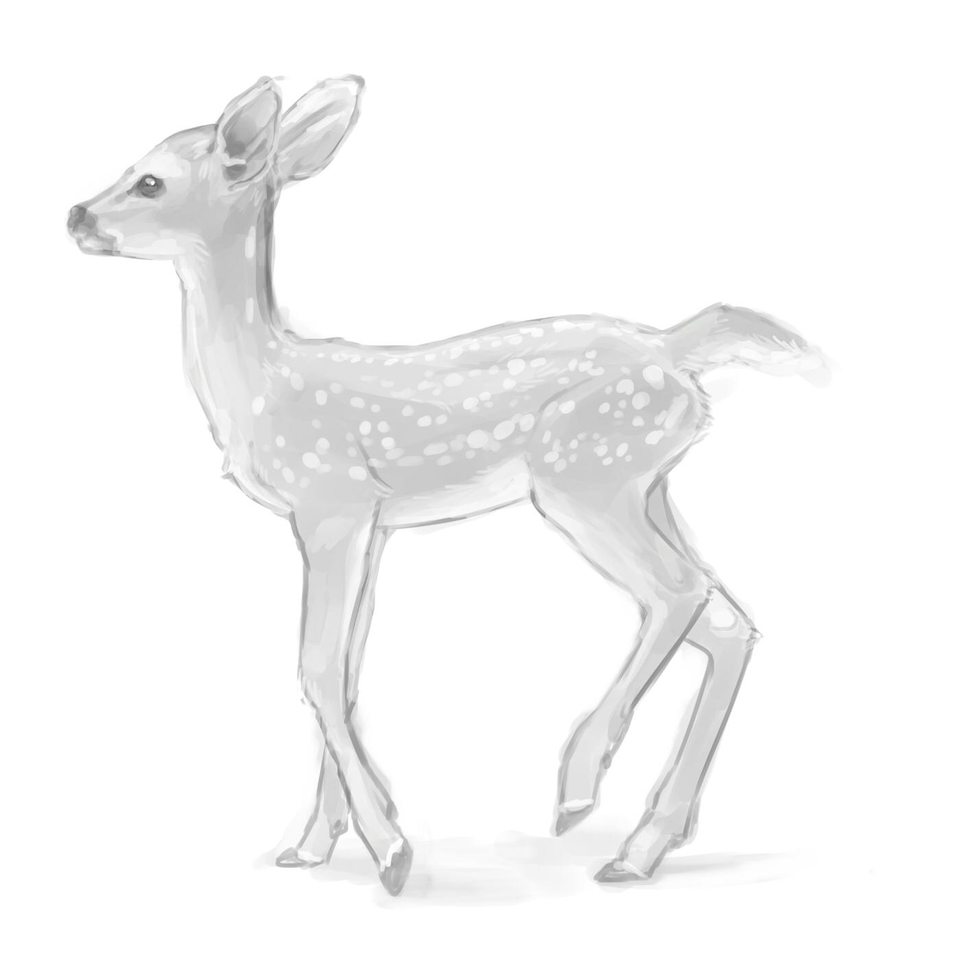 fawn sketch fawn wetcanvas sketch fawn