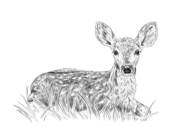 fawn sketch morning fawn drawing by linda reichert sketch fawn