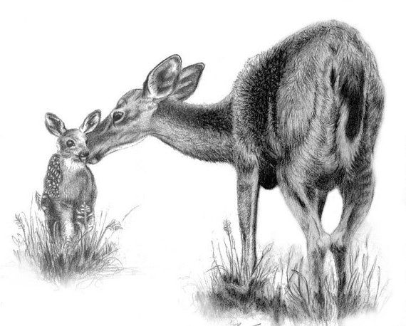 fawn sketch mother deer fawn print graphite and sketches sketch fawn