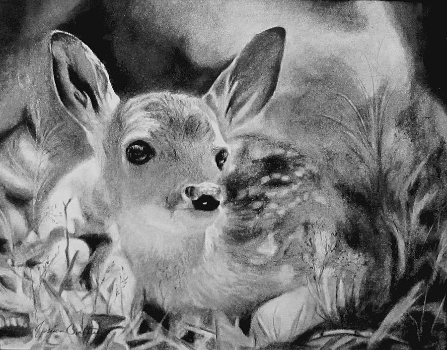 fawn sketch sleeping fawn by kissel71 on deviantart sketch fawn
