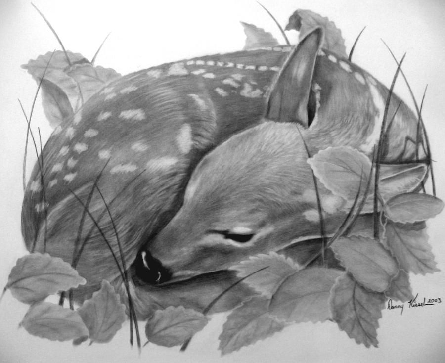 fawn sketch white tail fawn pen and ink drawing by doug kreuger sketch fawn