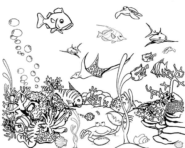 fish aquarium coloring pages aquarium coloring pages at getdrawingscom free for coloring pages aquarium fish