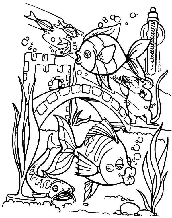 fish aquarium coloring pages download online coloring pages for free part 39 aquarium fish pages coloring