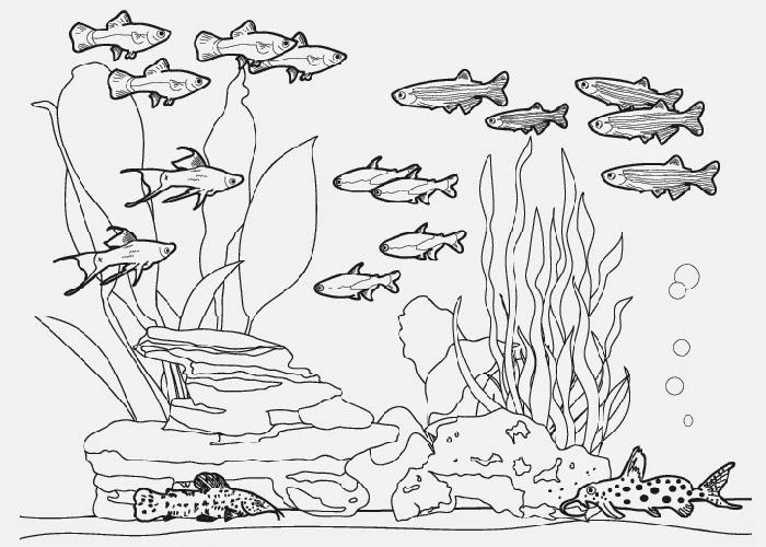fish aquarium coloring pages fish tank coloring pages free coloring pages and aquarium coloring pages fish