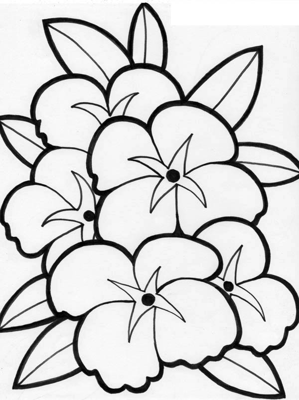 flower coloring page flowers coloring pages minister coloring flower coloring page