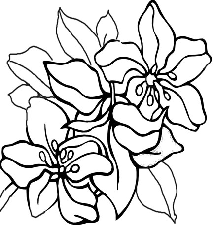 flower coloring pages free printable simple flower coloring pages getcoloringpagescom flower free printable coloring pages