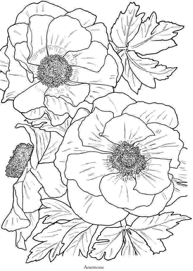 flower coloring pages soccer wallpaper flower coloring pages coloring pages flower